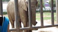 洛阳王城公园小孩敢喂大象