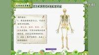 苏教版四年级科学下册第一单元 骨骼与肌肉