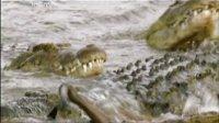 马拉 生命之河 140128