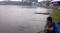 2012-08-25 伽玛鲤4.5米手竿遛鱼视频