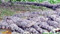 千条鳄鱼浮出水面 南京地震局:近期不会地震 120910 新闻现场