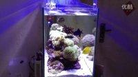 我的海水缸