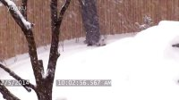 Toronto Zoo Giant Panda Enjoys Epic Snow Fall
