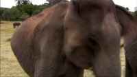 大象的盛会 140208
