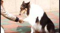 狗狗语言翻译器