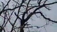 11月11日真情永在老师PS基础【用计算命令抠图-通道法抠图】课录