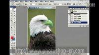 [PS]photoshop教程:19、ps中历史记录艺术画笔的使用方法