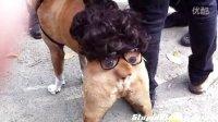 视频: 见过会动的狗狗屁股吗 美女最爱的网站 http:nutz.cn112a?mp5