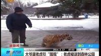 """大爷遛老虎引""""围观"""":老虎被送到森林公园[第一时间]"""
