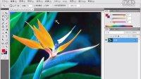 [PS]Photoshop CS4操作教程(17.使用魔棒工具)