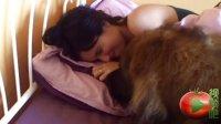 美女与狗狗同床激情