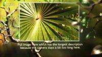2012年5月28日AE影视包装模板-Butterfly Forest(影脑网免费分享)