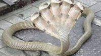 WWE hindi movie 印度的五头蛇王 奇迹都来骂街  5head indian snake