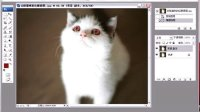 ps教程ps学习ps全套ps视频ps安装ps调色ps手绘ps入门ps抠图去除猫咪的红眼