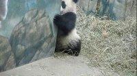 可爱动物高清图片集锦
