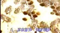 08中蜂科学饲养技术视频