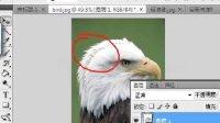 [PS]photoshop17零基础教程 魔术棒.快速选择.容差.对所有图层连续17