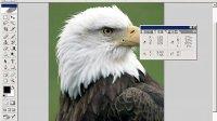 [PS]photoshop cs 全面通视频教程69—信息面板
