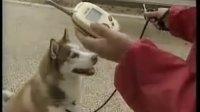 神奇的宠物狗翻译器