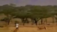 CCTV-动物世界不敢播放的短片!BT怎么写?