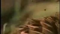 BBC生命科学珍藏系列-飞禽传 02
