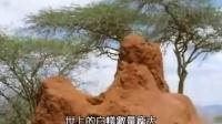BBC生命科学珍藏系列-昆虫帝国 05