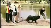 街头老外帮美女看狗的下场