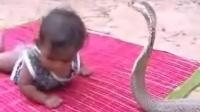 和眼镜蛇王对峙的小孩