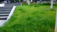 温州市自平衡电动轮车思维火星车总代