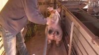 """CSol2(韩服)""""猪猪娱乐圣诞模式""""官网宣传视频"""