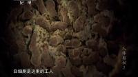 人体奥秘(二) 140411
