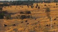穿越非洲草原 140415