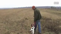 Free Hunting Dog Training Videos - Heel Part 2