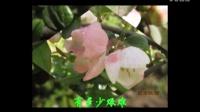 AE制作文字爆炸片头、闪白切换,海棠图片制作视频。