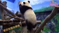 【故事】Giant Panda Cub Yuan Zai Playing With Water