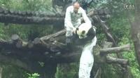 201405091100治ㄍ小墨子收貓Giant panda Yuanzai