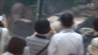 20140516長官到圓仔趴趴造~Giant panda Yuanzai