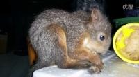 小松鼠吃饼干