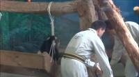 20140522超萌圓仔抱腿~趴窗擊掌版片長約17分.Giant panda Yuanza
