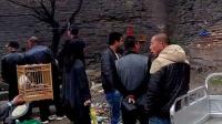视频: 兴城鸟市,QQ群212522667