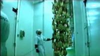 西班牙火腿 伊比利亚火腿 真空切片 手工切割 宣传视频伊品风情