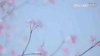 与郑容和的樱花之恋