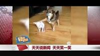 黑龙江《天天说新闻》:轻松时刻 搞笑小动物+运动场上的奇葩
