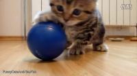 最甜蜜最好玩的小猫咪