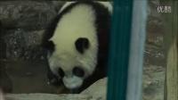 20140605 圓仔你這是玩水ㄇ....Giant panda Yuanzai