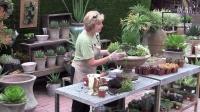 【醉花网】大型多肉植物组合盆栽的布景造型DIY