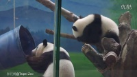 2014-06-14 圓仔玩藍桶桶(二)(The Giant Panda Yuan Zai)