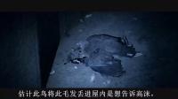 唐唐神吐槽:最狗血的猛片 《笔仙惊魂3》 63