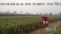 冀新牌最新型玉米收割机、玉米收获机作业视频118