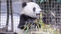 San Diego Zoo ~ 7.7.2014 ~ Xiao Liwu